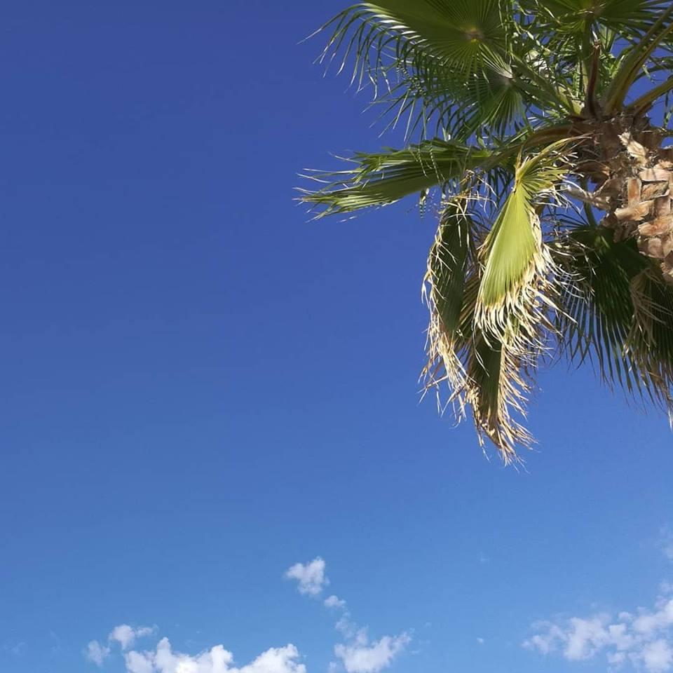 Cielo, nuvole e palme